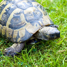 Tortoise and Turtle