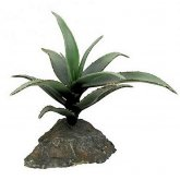 Lucky Reptile Agave medium approx 15cm