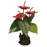 Lucky Reptile Anthurium Red 40cm