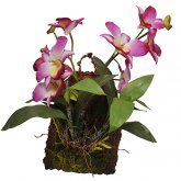 Lucky Reptile Hanging Orchid Purple