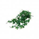 Lucky Reptile Ivy Bush approx. 60cm