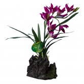 Lucky Reptile Orchid Purple Approx 40cm