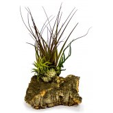 ProRep Airplant Cork Display Medium
