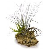 ProRep Airplant Cork Display X-Large