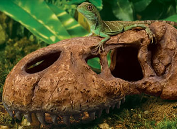 Reptile Decor Www Picturesso Com