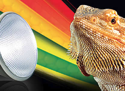 reptile lighting
