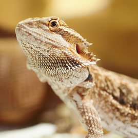 Reptile Centres Animals