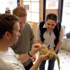 Young Antony and a bearded dragon