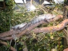 reptile-centre-at-whipsnade-zoo-24-w1500-h1500