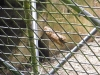 reptile-centre-at-whipsnade-zoo-74-w1500-h1500