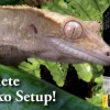 Want a Crested Gecko? – Win a Complete Setup Now!!