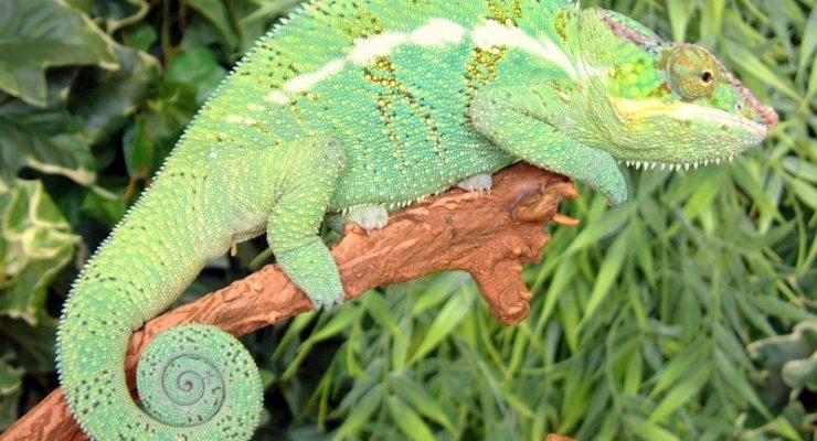 Want to know which UVB bulbs our reptiles use?