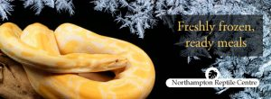 Frozen Snake Food