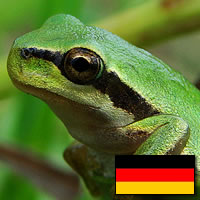European Green Tree Frog