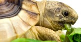 The best way to Hibernate your Tortoise?