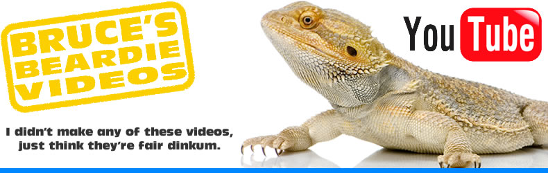 Bearded Dragon Videos