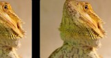 Here's some recent reptile videos you may have missed. You choose what's next!