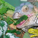 Did you know you can grow your own reptile food at home?