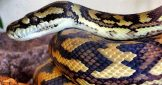 7 Awesome Pet Snakes