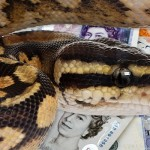 Reptile Centre Price Match Now Available