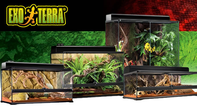 exo terra terrarium features and benefits reptile centre. Black Bedroom Furniture Sets. Home Design Ideas