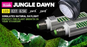 Arcadia Jungle Dawn