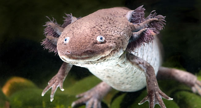 12 awesome pet amphibians reptile centre