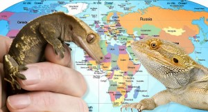 Where Do Reptiles Come From?