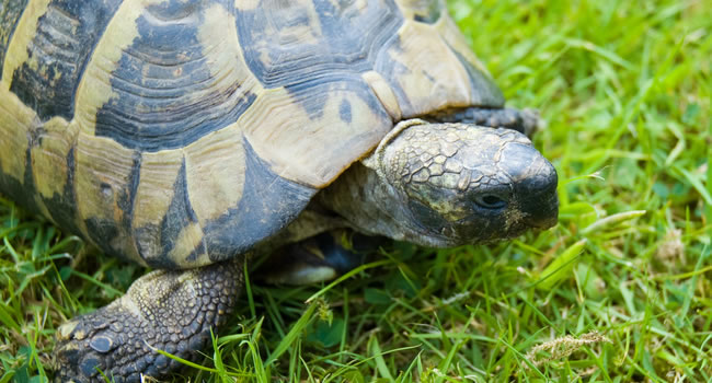 5 of the Best Pet Tortoises | Reptile Centre