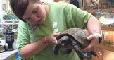 5 of the Best Pet Tortoises