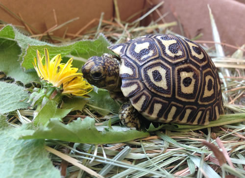 Tortoise Substrate