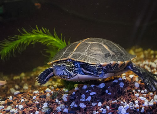 Turtle Substrate