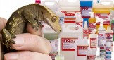 Why All Reptiles Keepers Should Use F10 Disinfectant
