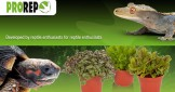 Grow Your Own Reptile Food! ProRep's Edible Plants