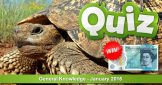 Reptile Quiz: General Knowledge