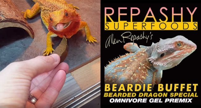 Repashy Beardie Buffet Review