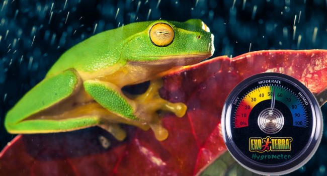 5 Ways to Increase Humidity for Reptiles