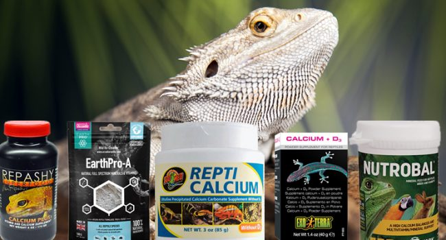 Which Supplements Should You Give to Bearded Dragons?