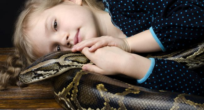 Top 3 Pet Snakes for Beginners