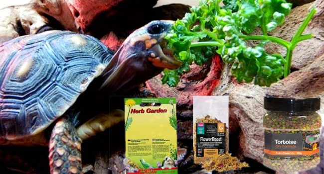 Which Dried Tortoise Diet Should I Use?