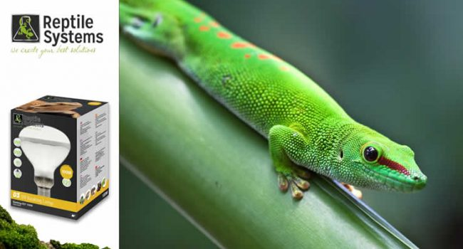 How to Use Mercury Vapour Lamps for Reptiles
