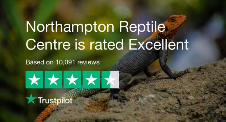 Northampton Reptile Centre on Trustpilot