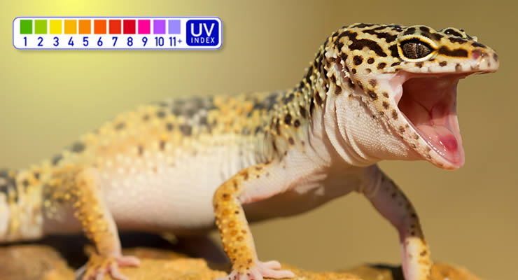 which ferguson zone leopard gecko