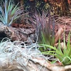 Buy Live Plants For Reptiles Online Reptile Centre