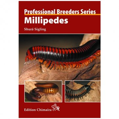 Chimaira Millipedes Professional Breeders Series