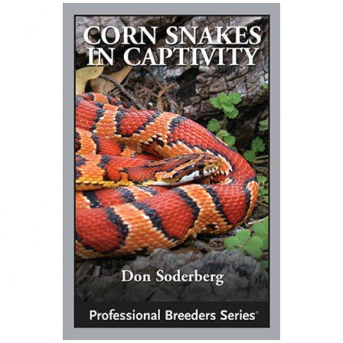 ECO Corn Snakes in Captivity