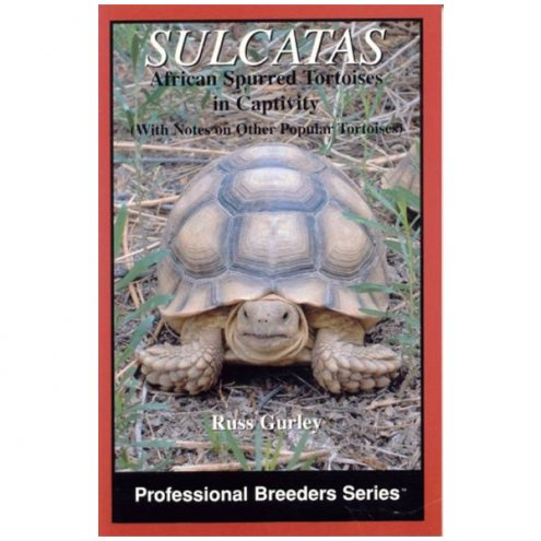 ECO Sulcata African Spurred Tortoise