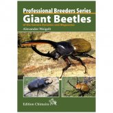 Chimaira Giant Beetles Professional Breeders Series