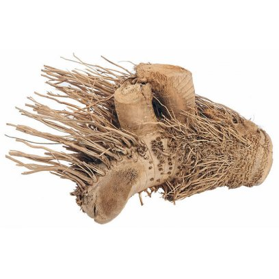 ProRep Hedgehog Bamboo Root Medium