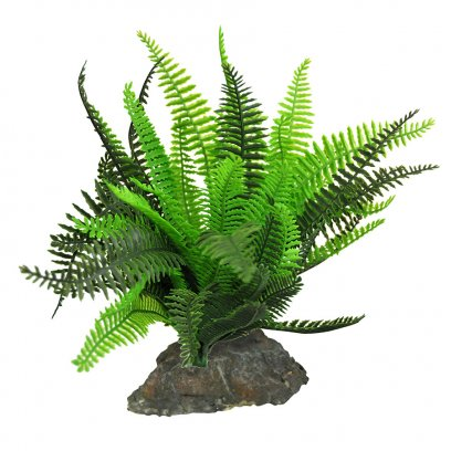 Lucky Reptile Fern